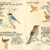 Vogelwelt_03-04_VB