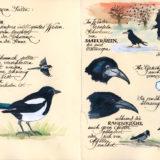 Vogelwelt_07-08_VB